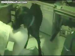 Pajeando al perro