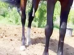 Rica jovencita con caballo