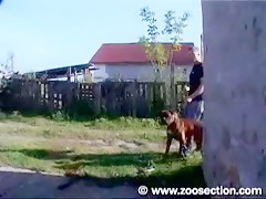 Boxer dog fucks with couple
