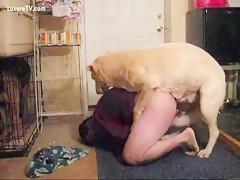 Labi y su perro