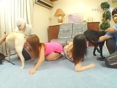 asian girls sucking dog cocks