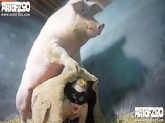 pig vengance
